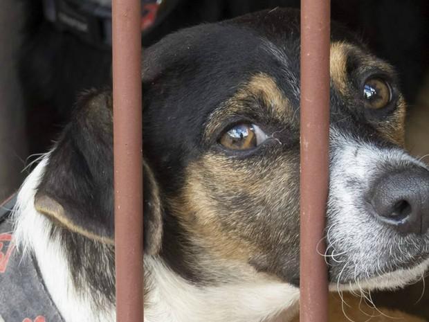 Entidade precisa manter os tratamentos e cuidados dos animais (Foto: Vânia Jucá/Divulgação)