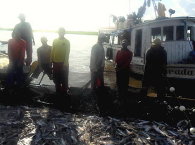 pescado prainha (Foto: Divulgação/MPE)