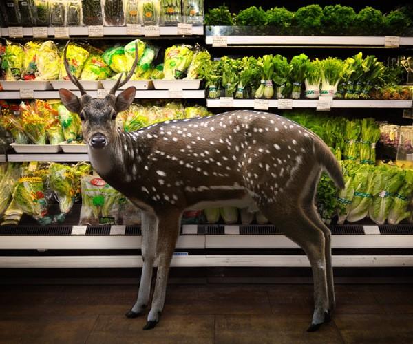 Foto da série 'Garden Fresh' (Foto:  Agan Harahap/Divulgação)
