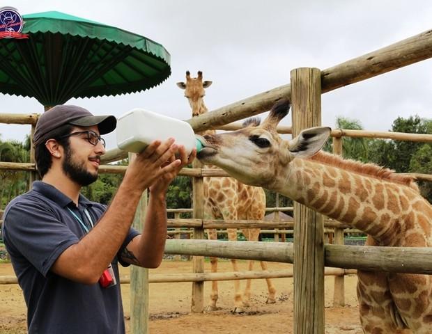 zoo (Foto: Divulgação)