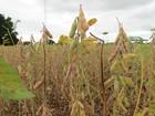 Abertura da colheita nacional da soja começa com ciclo de palestras em MS