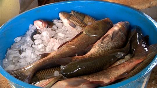 Agricultores de Ijuí criam cooperativa para criação de peixes