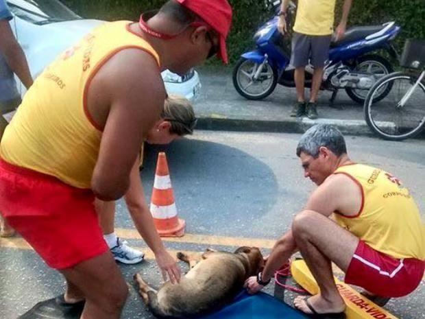 Cachorro foi socorrida por Corpo de Bombeiros do Gurujá, SP (Foto: Cristiane Russo/Arquivo Pessoal)