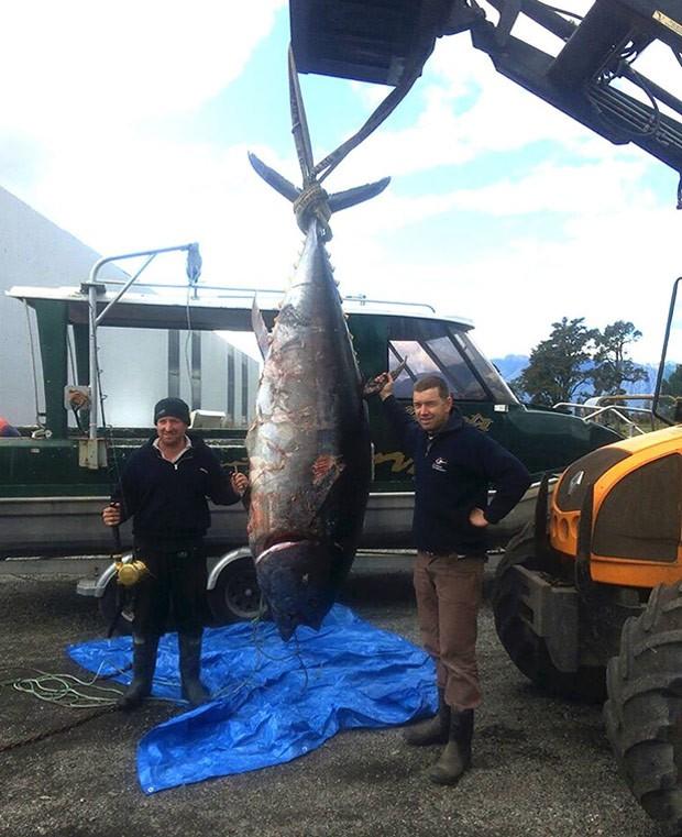Ben Monk (esq) e Ash Clarke posam o enorme peixe (Foto: Reprodução/Facebook/Big Game Hunting New Zealand)