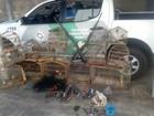 'Operação Fauna' resgata 78 aves e apreende armas e munições