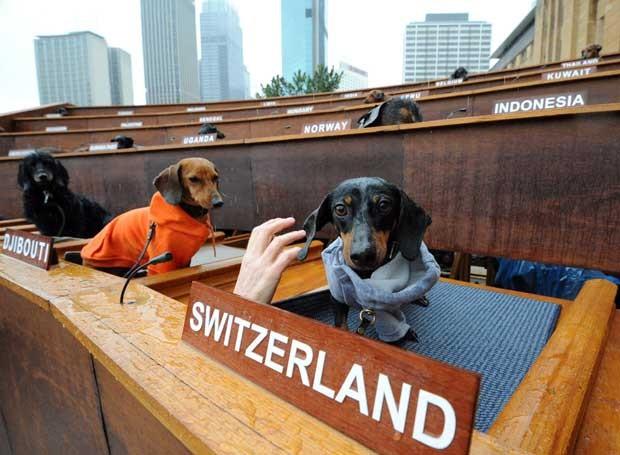 Instalação do artista Bennett Miller mostra 47 cães representando diferentes nações na ONU. (Foto: Torsten Blackwood/AFP)