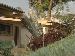Árvore foi arrancada pela raiz e atingiu telhado de creche em Xanxerê (Foto: Reprodução RBS TV)