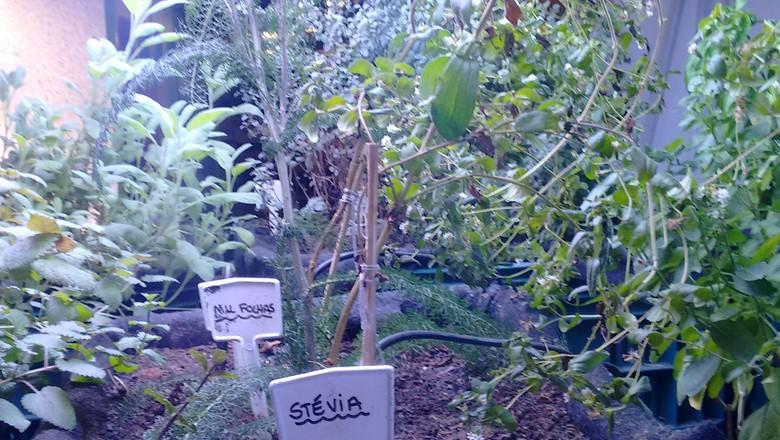 horta-plantação-hortaliças (Foto: Amanda Oliveira )