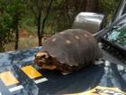 Jabuti é encontrado parado em pista da BR-020, em Flores de Goiás