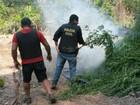 Polícia incinera plantação de maconha em Concórdia do Pará