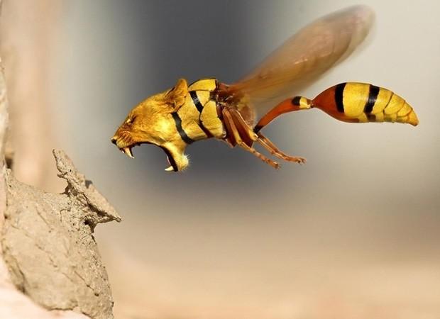 Utilizando softwars de edição de imagem, criaturas bizarras como a 'lespa' foram criadas (Foto: Reprodução)