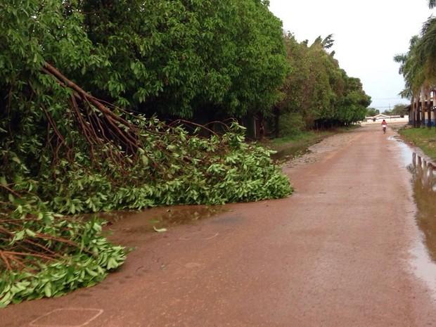 Árvores caíram e houve quedas de energia pela cidade (Foto: Jaqueline Fonseca/TV Rondônia)