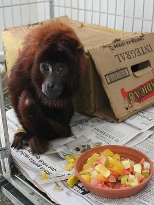 Animal de recupera bem e espera por um lar definitivo (Foto: Larissa Matarésio/G1)