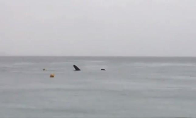 Tubarão-baleia é filmado em Copacabana