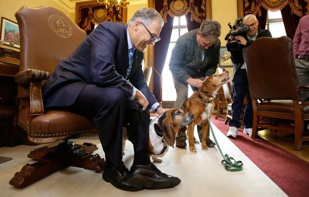 Cadela chamada Tillie recebeu o título de herói do governador de Washington, Jay Inslee (Foto: Ted S. Warren/AP)