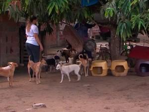 Grupo na Bahia cria 'casas' para cães e gatos que sofrem com o frio, em Feira de Santana (Foto: Imagem/ Tv Subaé)