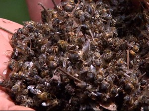 Região registrou milhões de mortes de abelhas nos últimos anos (Foto: Marlon Tavoni/EPTV)