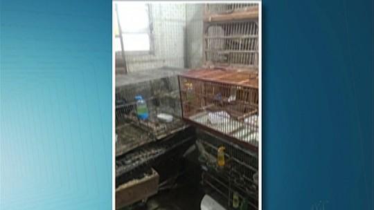 Comerciante de Ferraz é flagrado vendendo pássaros silvestres