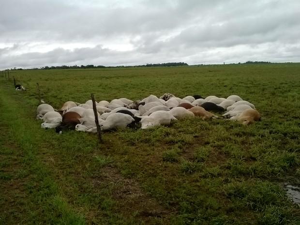 Raio matou animais durante tempestade na sexta-feira (28). (Foto: Divulgação/João Damasceno de Sá Filho)