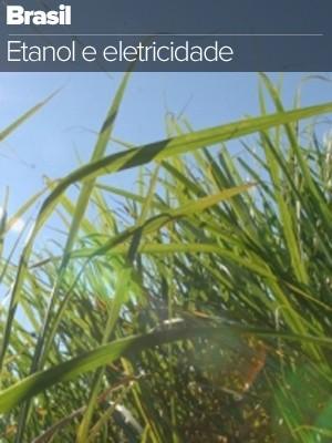 selo etanol (Foto: Arte G1)