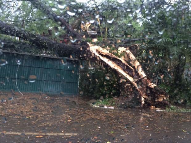 Árvore cai em cima de casa na Avenida Pedroso de Moraes, esquina com a Avenida dos Semaneiros, na Zona Oeste da cidade  (Foto: Heloisa Ferreira/Arquivo Pessoal )
