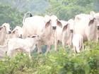 Chegada das chuvas dão alívio a agricultores e pecuaristas do MA