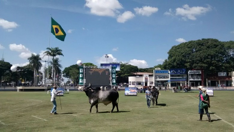 expozebu-2016-julgamento (Foto: Sebastião Nascimento/Ed. Globo)
