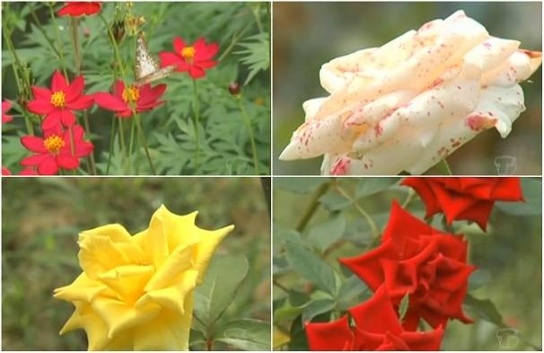 """Como já dizia Ana Carolina, """"toda mulher gosta de rosas"""" (Foto: Priscila Miranda/ TV Tapajós)"""