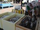 Ação leva a feiras de Macapá 16 toneladas de pescado a preço popular