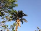 Meteorologia alerta para baixa umidade do ar na quarta-feira em MS