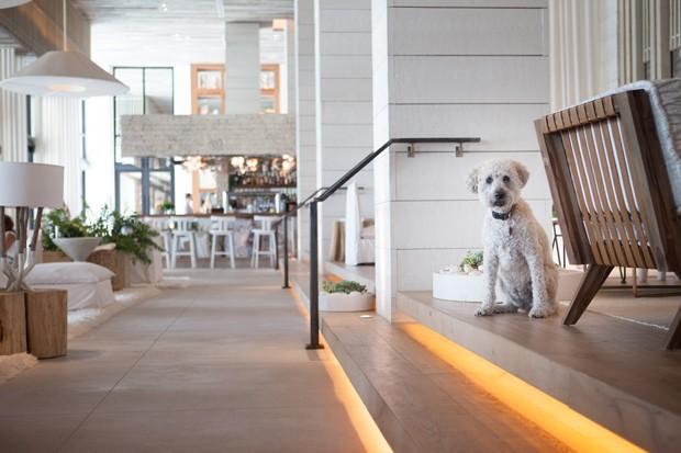 Neste hotel em Miami, os cães são tratados como deuses (Foto: Divulgação)