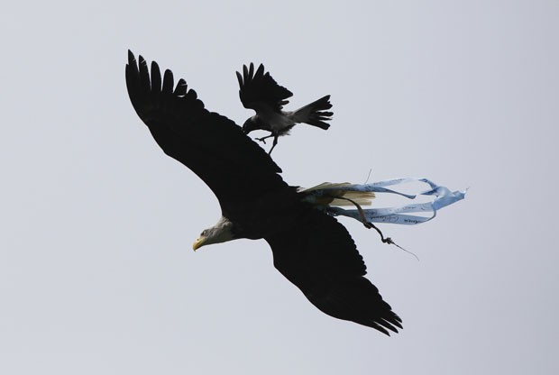 Corvo foi flagrado atacando a águia chamada Olimpia, que é mascote da Lazio (Foto: Max Rossi/Reuters)