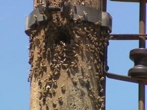 Ataque de abelhas cancela corrida em kartódromo de Ribeirão Preto (Foto: Valdinei Malaguti/ EPTV)