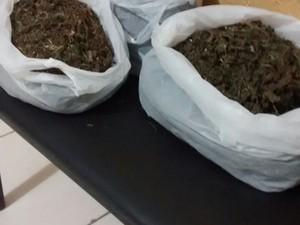 Droga apreendida em Terra Nova (Foto: Divulgação / Polícia Militar de Terra Nova)
