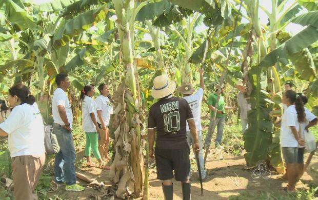 Índios e pesquisadores no bananal dentro da floresta. (Foto: Reprodução/TV Amapá)
