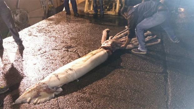Lula gigante de 10 metros de comprimento e 150 quilos foi capturada acidentalmente na Espanha (Foto: Reprodução/Facebook/Luis Laria )