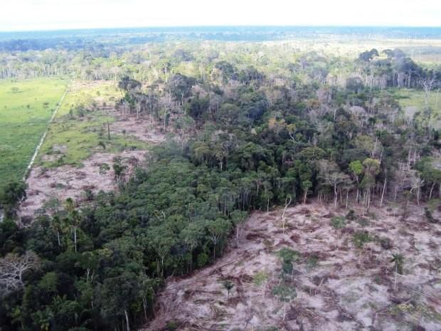 Mais de um milhão de hectares foram embargados pelo Ibama devido o desmatamento (Foto: Divulgação/Ibama,RO)