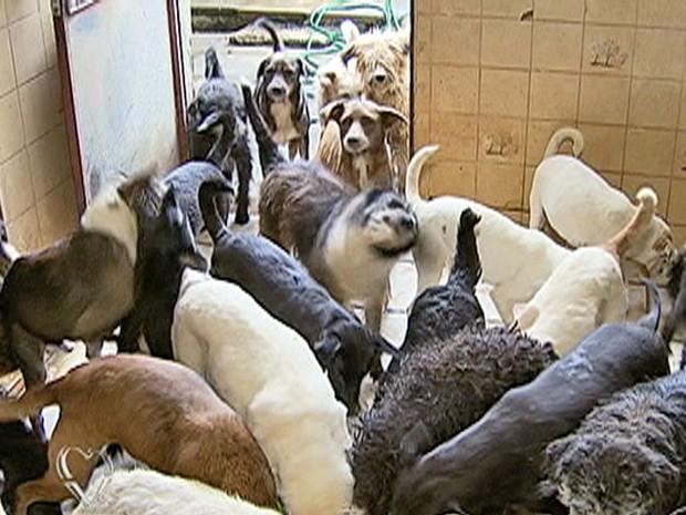 Animais também entram na lista de alguns acumuladores compulvisos (Foto: Mais Você / TV Globo)
