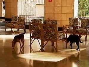 Cães no Grande Hotel em Araxá (Foto: Reprodução/TV Integração)