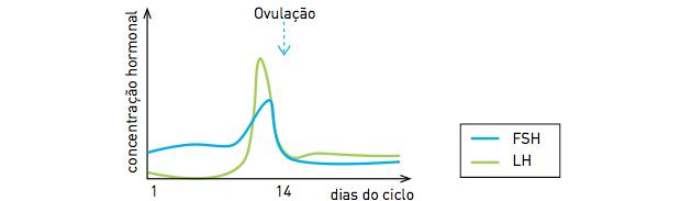 Gráfico de variação hormonal (Foto: Reprodução/UERJ)