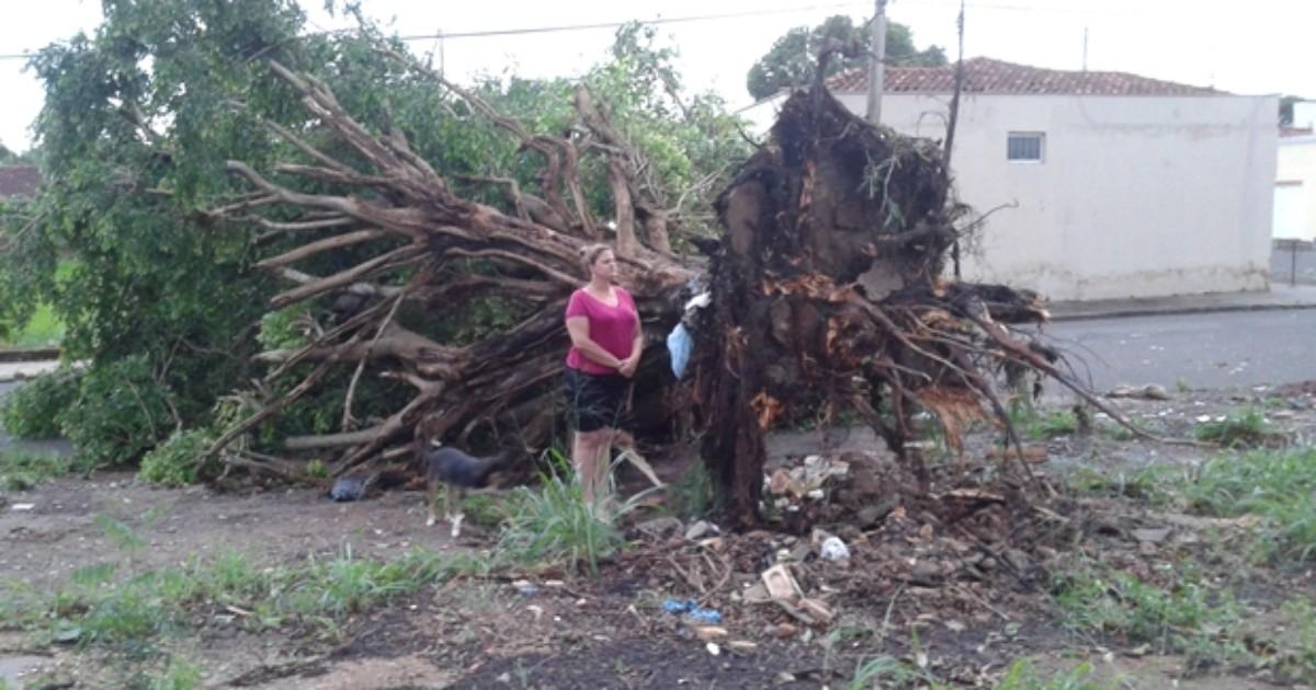 Chuva forte e vendaval causam destruição no noroeste paulista - Globo.com
