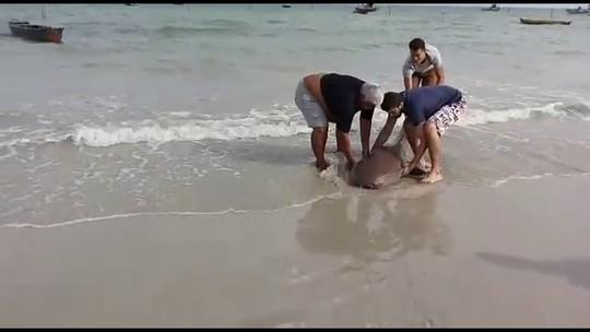 Banhistas resgatam tubarão ameaçado de extinção em praia de Pernambuco