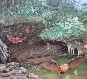Para os cientistas, os excrementos dos morcegos contribuíram para a preservação do esperma dos ostrácodos (Foto: Divulgação / UNSW)