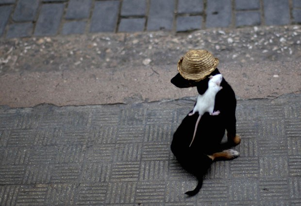 'Negrito virou atração em Havana por levar rato em suas costas. (Foto: Ramon Espinosa/AP)
