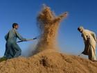 IGC eleva previsão de produção de grãos para 2,077 bilhões de toneladas