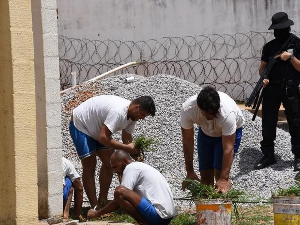 Presos arrancam capim na área ao redor do Pavilhão 5. (Foto: Thiago Amaral)