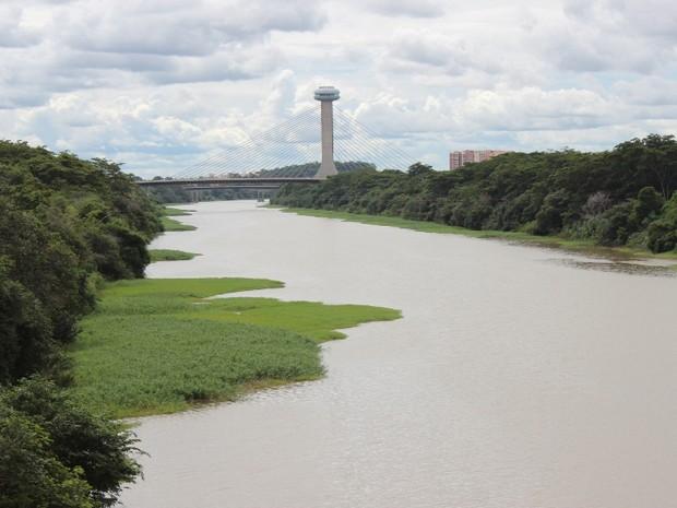 Segundo ambientalistas, plantas aquáticas surgem devido a poluição no Rio Poti, em Teresina (Foto: Gil Oliveira/ G1)