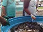 Feira pretende vender três toneladas de pescados no Parque da Pecuária