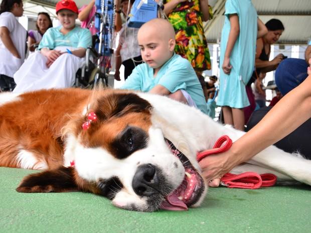Cachorros dóceis fizeram a tarde de pacientes mais feliz. (Foto: Paulo Goeth/Divulgação)