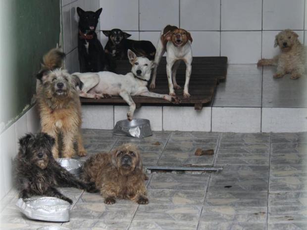 Cachorro recebem tratamentos e cuidados diarimente em canil